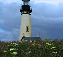 Lighthouse at Yaquina Head by Barbara  Brown