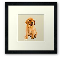 Oil Painting of a Cute Red Labrador Retriever Puppy Portrait  Framed Print