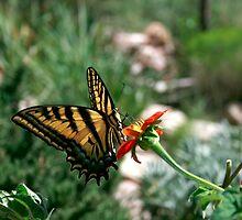 Butterfly Garden by UmaJ
