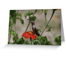 Smiling Hummingbird Greeting Card