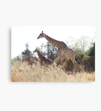 Mom and baby giraffe in Botswana Canvas Print