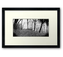 The Forrest Framed Print