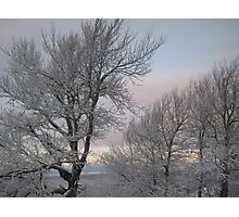 Trees After an Ice Storm Photographic Print