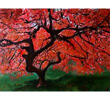 Japanese Maple Tree Red Pink Leaves Contemporary Acrylic Painting Photographic Print