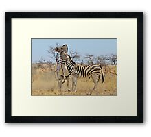 Zebra Fight - African Stallions Framed Print