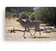 Male Kudu Antelope with Oxpecker Birds Canvas Print