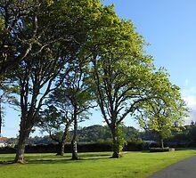 Row of Trees, Lews Castle Grounds, Stornoway by SunriseRose