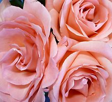 Wedding Roses by Jess Meacham