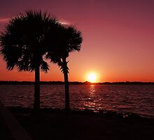 Wabasso Sunset by Barbny