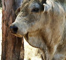 The bull look by Danielle Espin