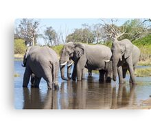 Three Elephants Wading in Botswana Canvas Print