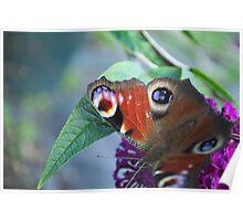 Butterfly Closeup Poster