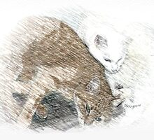 Cats like to cuddle by OlaG