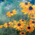 Coneflower Canticle by sundawg7
