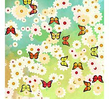 Daisies and butterflies Photographic Print