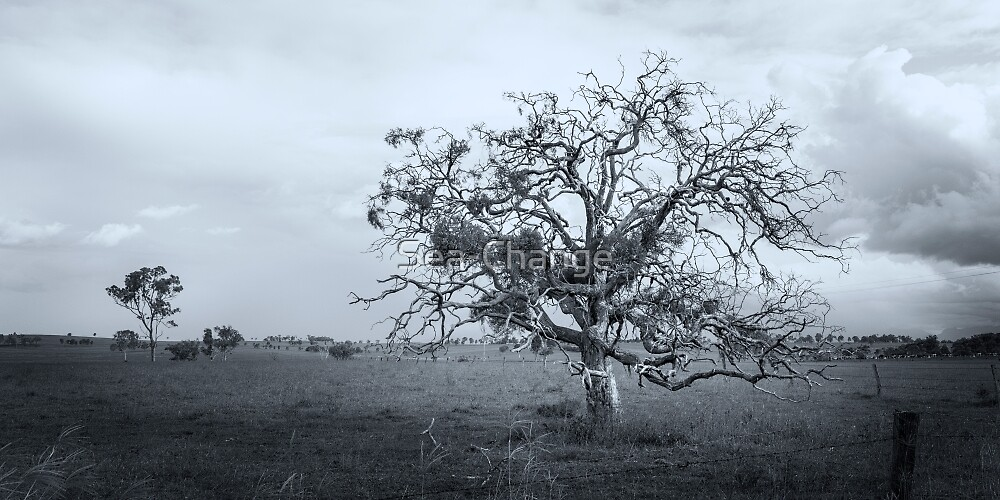 The Gnarled Tree by Sea-Change
