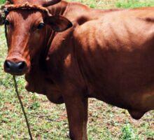 Young Bull, Jinja Uganda Sticker