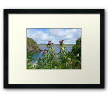 Hemp agrimony near the cliff path at Porth Meudwy Framed Print