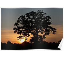 Broad Oak Sunset  Poster