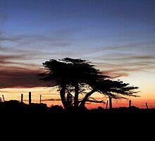 Evening Stillness by Angelika  Vogel