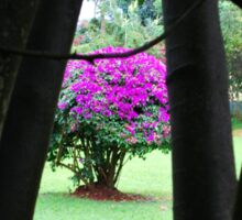 Flowering Tree, Jinja, Uganda Sticker