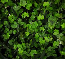Lucky garden  by RowanAllsop97
