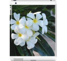 Frangipani or Yellow and White Plumeria flowers, Barbados, WI If you like, please purchase, try a cell phone cover thanks iPad Case/Skin