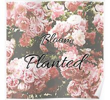 Bloom where you are Planted flower quote Poster