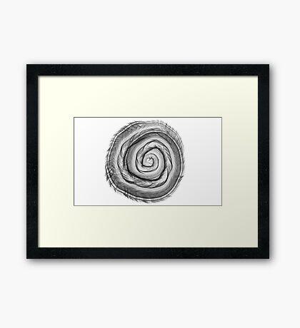 Dark Snail Shell Framed Print