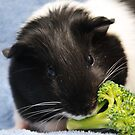 Hungry Guinea Pig by L.D. Franklin