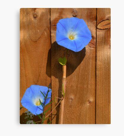 Baby Blues............ Canvas Print