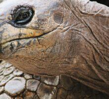 Aldabra Tortoise Sticker