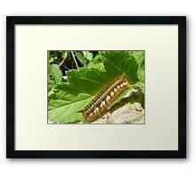 Brush or Caterpillar? Framed Print