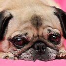 Cute Pug by L.D. Franklin