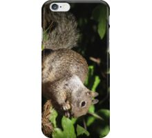 Cute Squirrel Photo and Cell Phone Case iPhone Case/Skin
