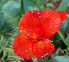 Bright Red Flower by clydemax