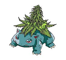 Stoned Bulbasaur Photographic Print