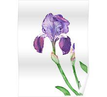 Iris #2 Poster