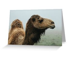 The Camel Greeting Card