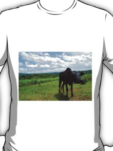 Black Calf in Field T-Shirt