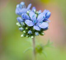 Blue by OpalFire