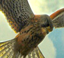 Is it a bird? Is it a plane? Sticker