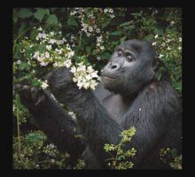mountain gorilla eating flowers, Uganda T-Shirt