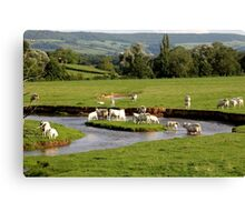 Landscape with cows (France) Canvas Print