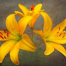 Yellow Lilliums by Mark Richards