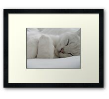 Night Night Archie Framed Print