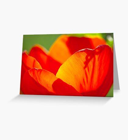 tulip close up Greeting Card