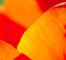 tulip close up Sticker