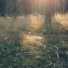 Forest in sun rays by Caterpillar
