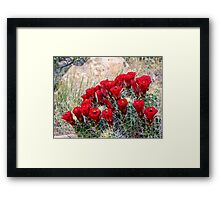 Red Claret Cup Cactus Flowers in Captiol Reef National Park Framed Print